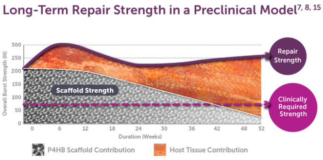 Long-Term Repair Strength in Preclinical Model