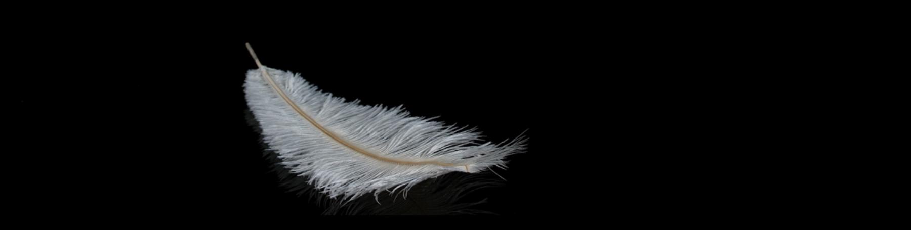 Feather Header